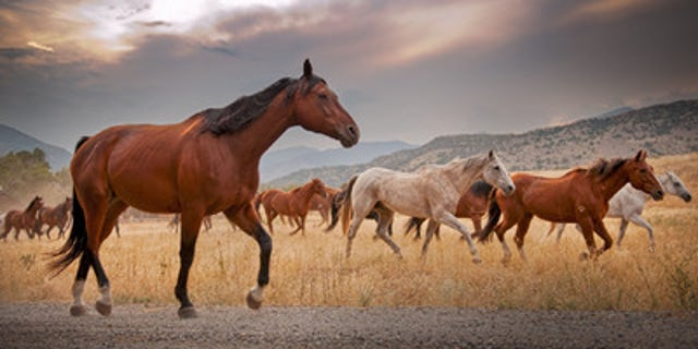 Horses taking a break from trail rides.