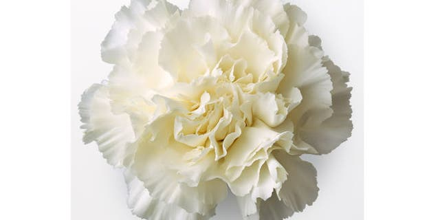The White Carnation was Belmont's signature cocktail for years, until race officials realized it wasn't popular with racegoers.