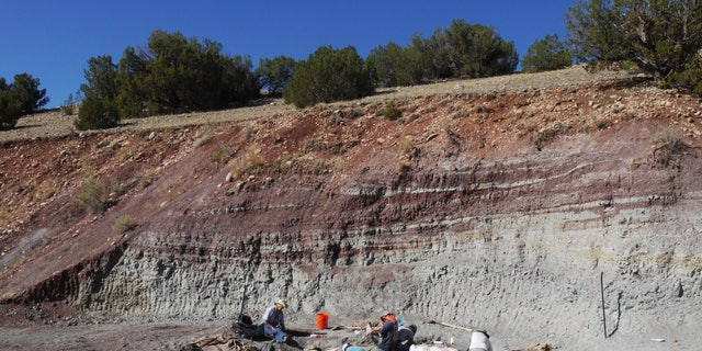 Crews excavating vertebrate fossils from the Hayden Quarry at Ghost Ranch, NM. These rocks contain abundant fossils of pollen, charcoal, fish, and reptiles, all of which were used to reconstruct the ecosystem and environment of this area 212 million years ago.