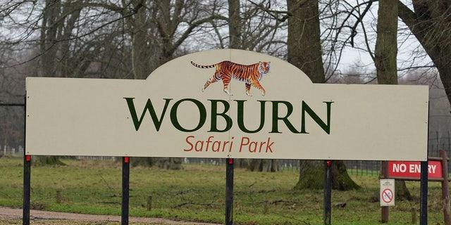 Thirteen monkeys died in a fire at Woburn Safari Park in the United Kingdom.