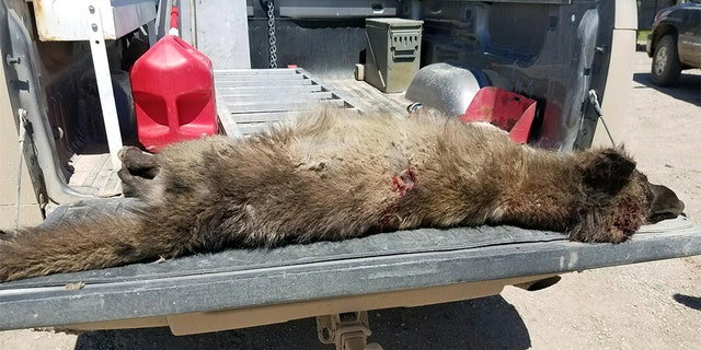 """""""We have no idea what it was,"""" Montana Fish, Wildlife and Parks spokesman Bruce Auchly said."""