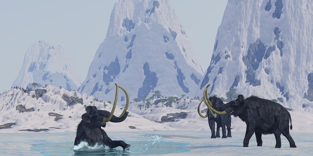 Help! A male woolly mammoth has fallen through the ice of a frozen lake.