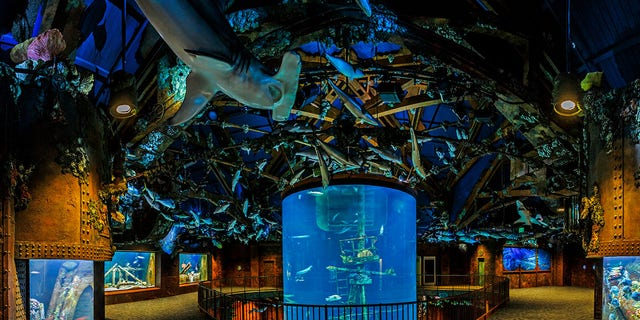 Some of the museum's resident 35,000 fish.
