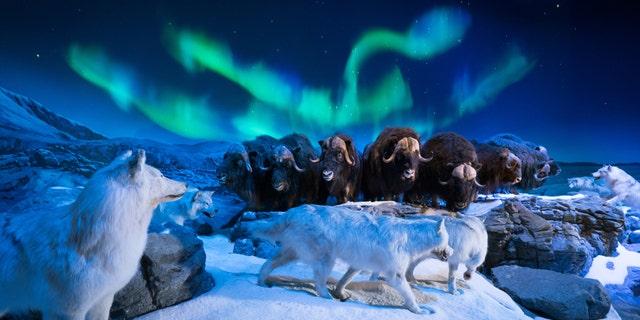 Beneath the aurora borealis.