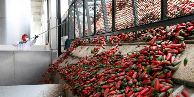A worker unloads chili peppers for making of Sriracha chili sauce at the Huy Fong Foods factory.