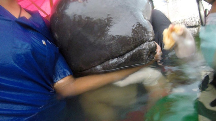 Whale dies in Thailand after eating more than 80 plastic bags