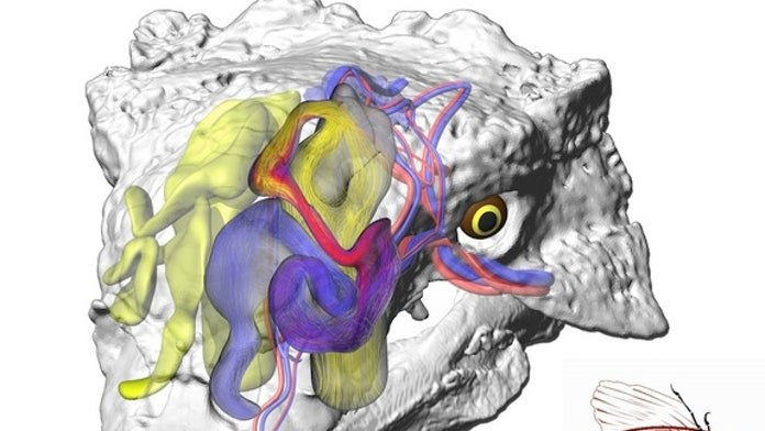 Giant armored dinosaurs breathed through 'Krazy Straw' airways