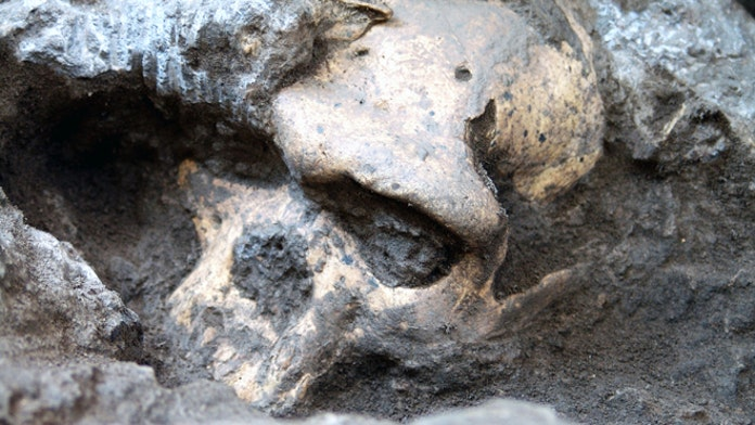 1.8-million-year-old skull shakes mankind's family tree