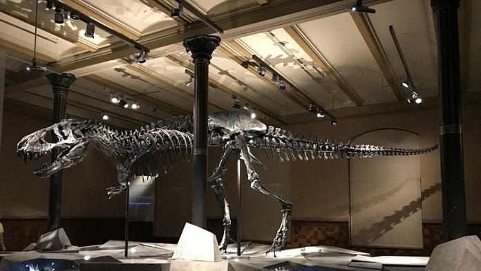 Dinosaur-killing space rock created dramatic temperature drop