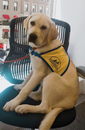 Learn More About Canine Companions For Independence