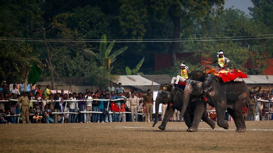 0d7cdfe1-India Elephant Festival