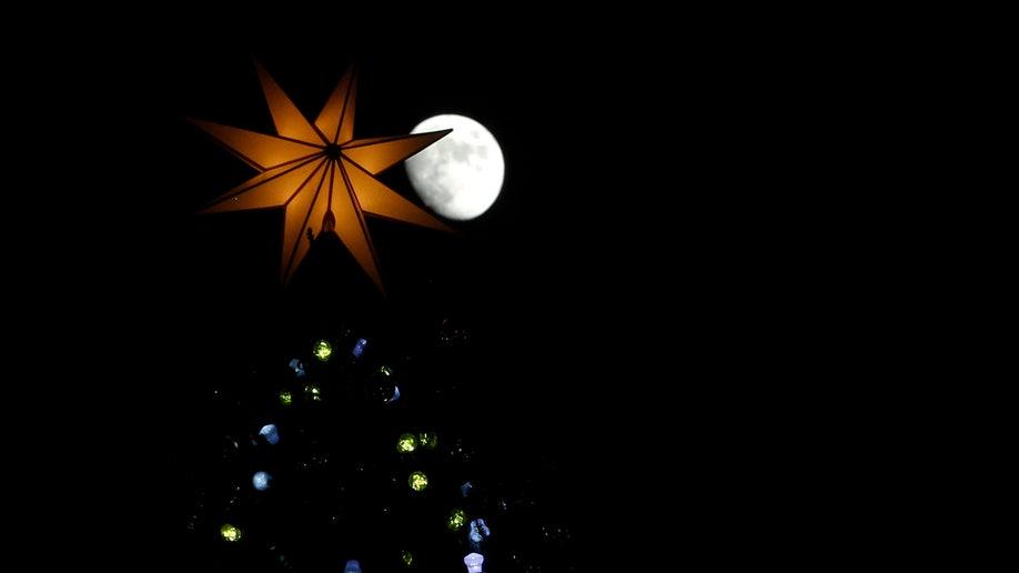 7c24c48b-Vatican Christmas Tree