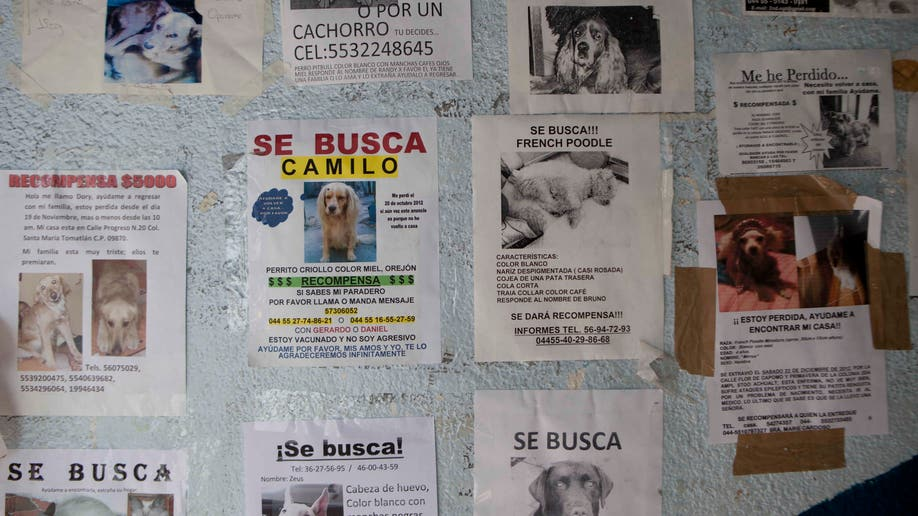 Mexico Wild Dog Killings