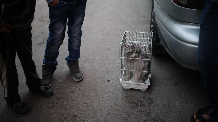 f7b8bdc4-Mideast Jordan Animal Abuse
