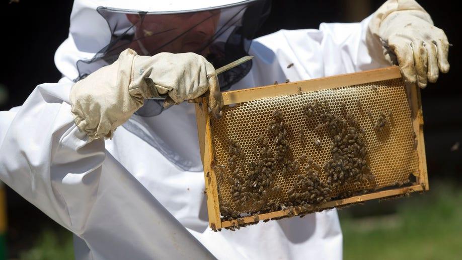 Croatia Bees Vs Mines