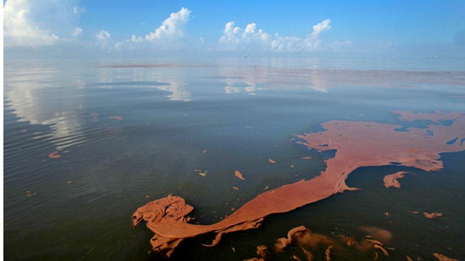 Gulf Oil Spill - Gallery