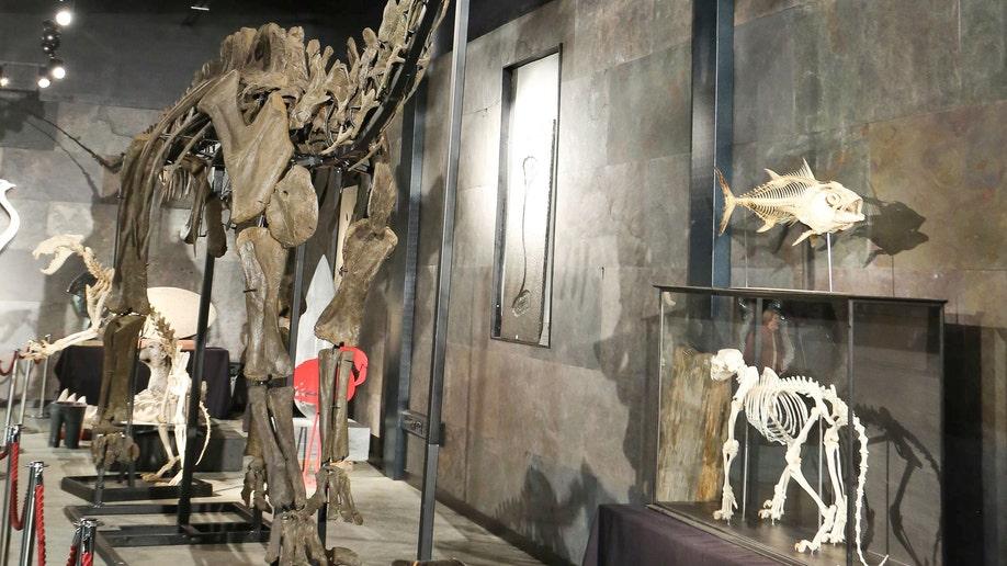 91c220df-Britain Dinosaur Auction