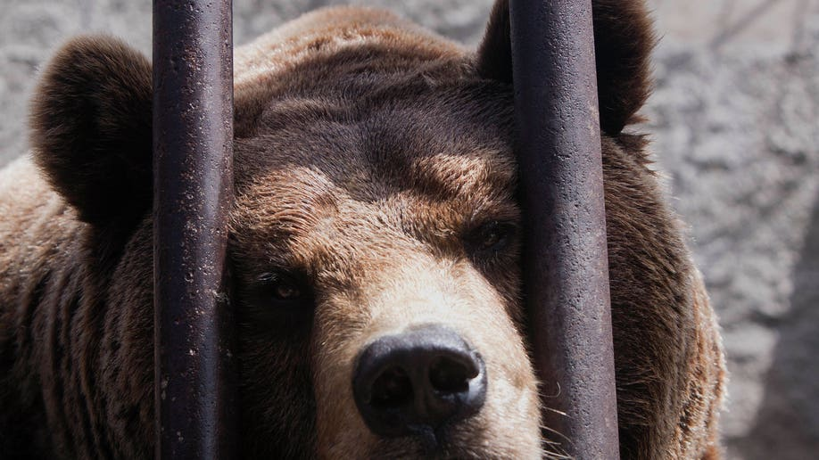 Kosovo Rescued Bears