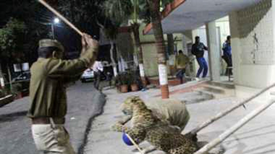 33939f78-India Leopard Scare