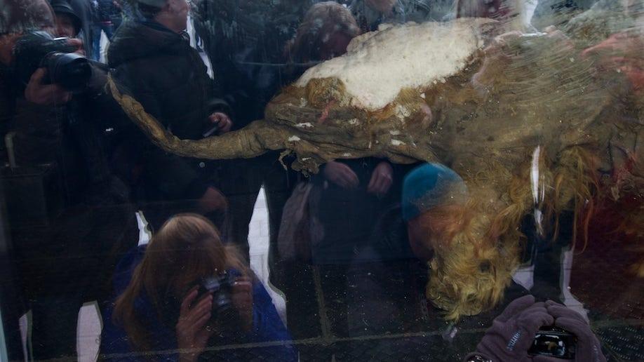 d5b41999-Russia Baby Mammoth