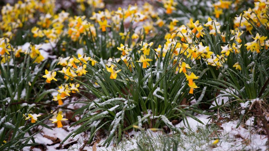 825b59f5-Britain Weather