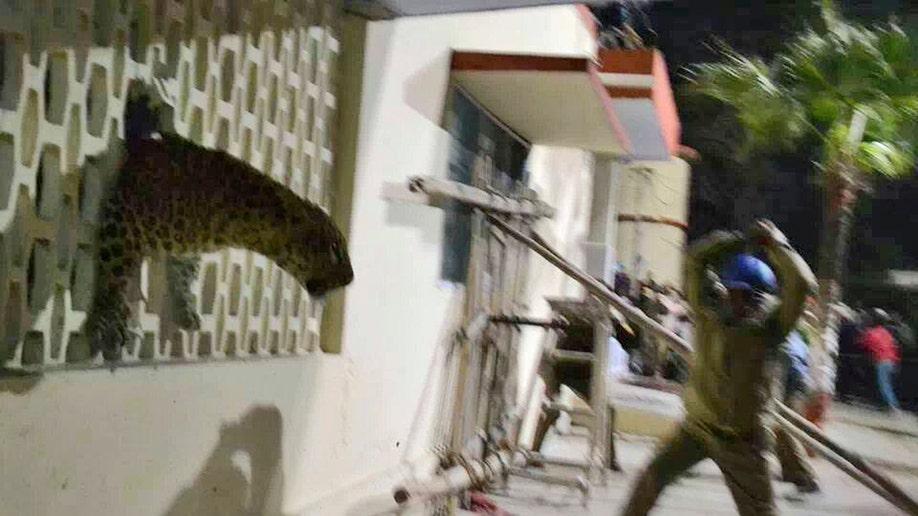 a1aca3e3-India Leopard Scare