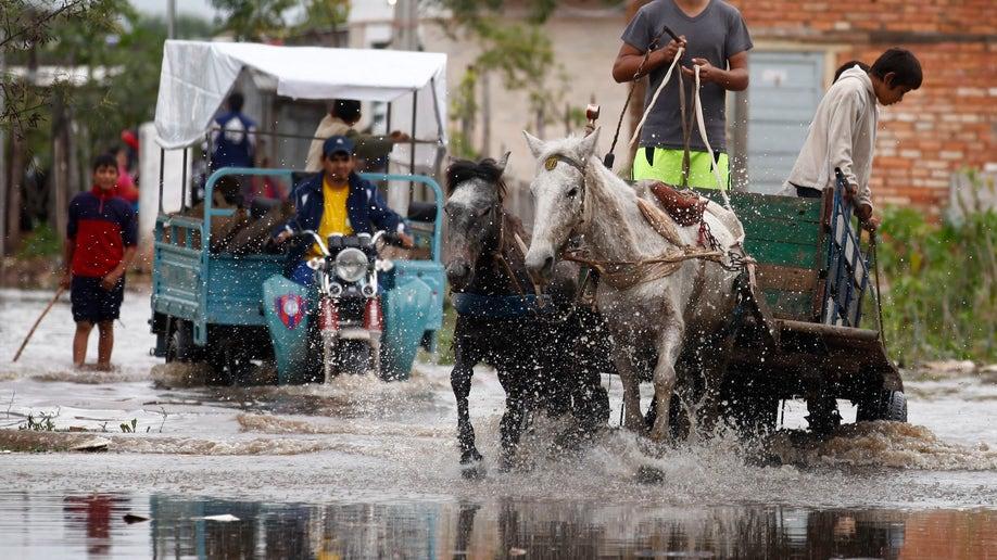 Paraguay Cart Horses
