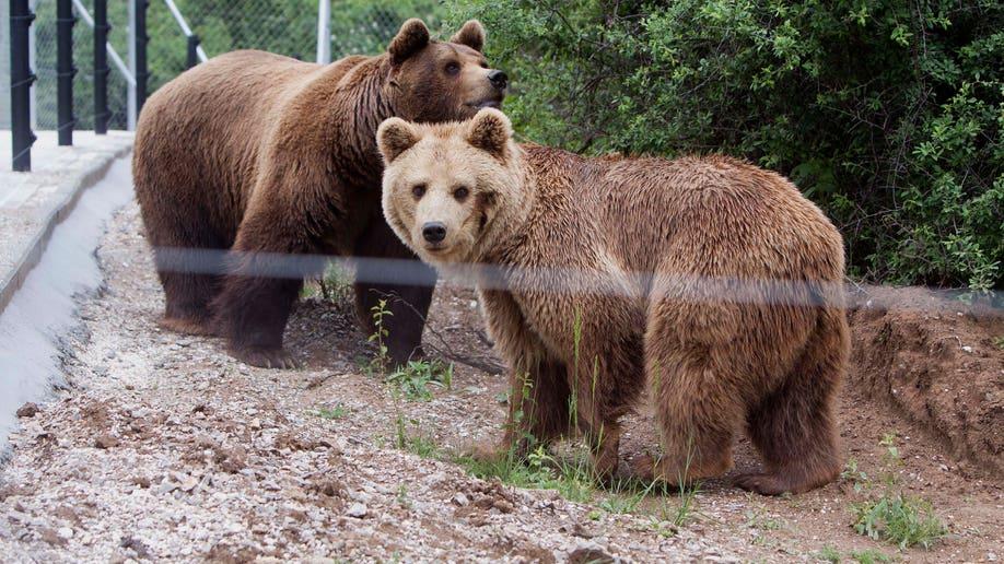 Kosovo Bears