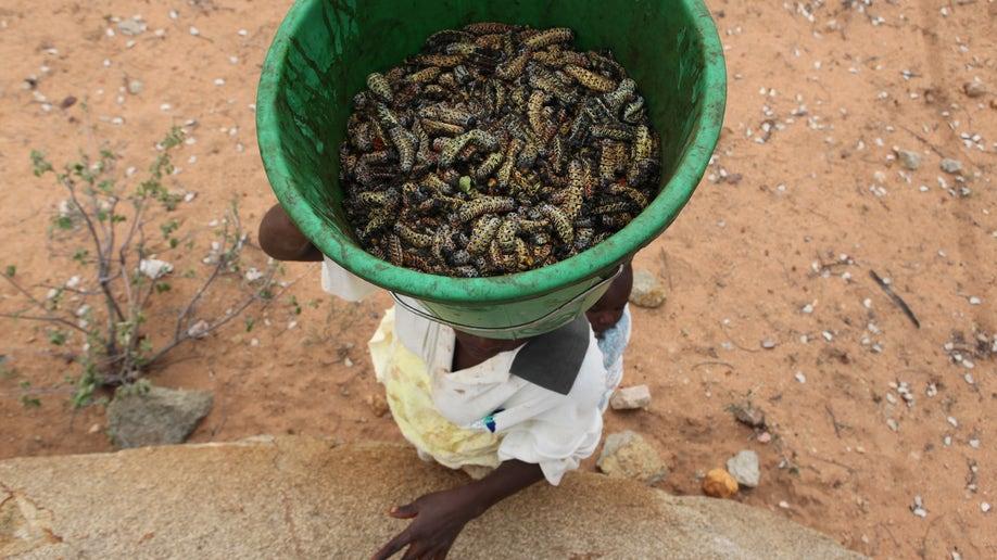 c5b58df8-Zimbabwe Worms