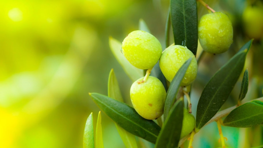 The healing power of olive leaf | Fox News