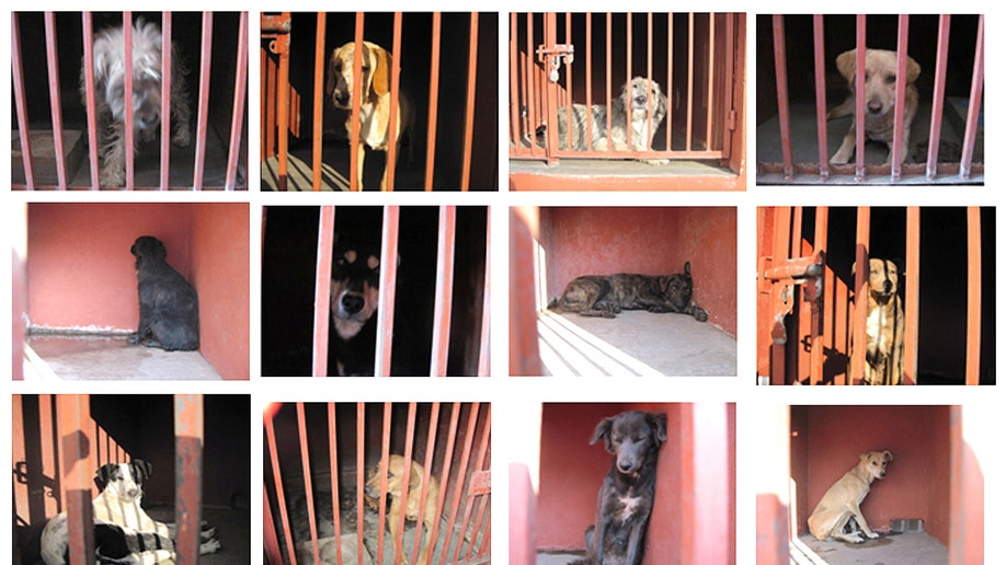 Mexico Wild Dogs Killings