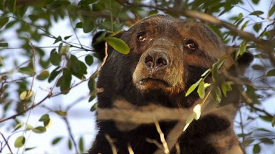 73b923e7-Sierra Bears