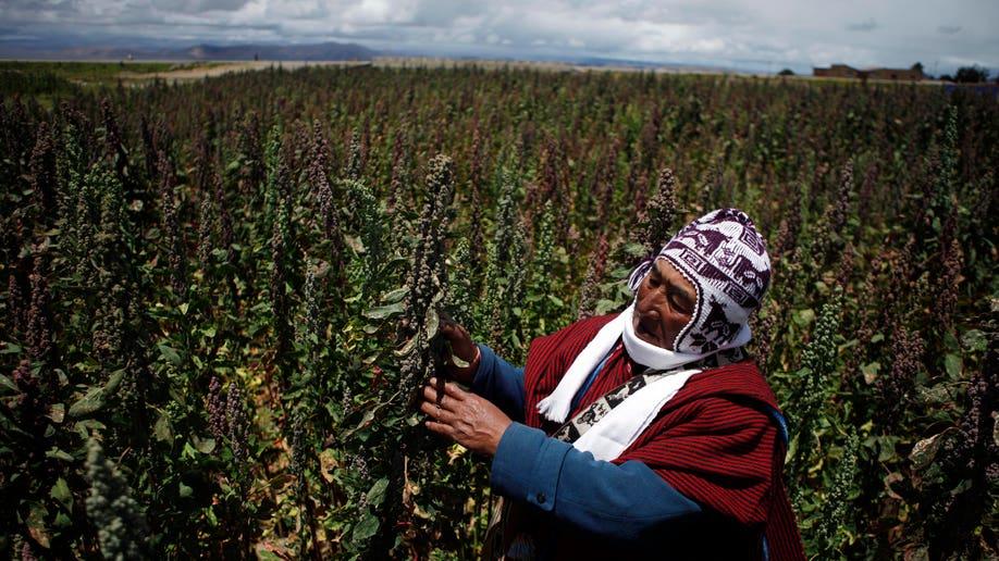 ede663bf-Bolivia Quinoa