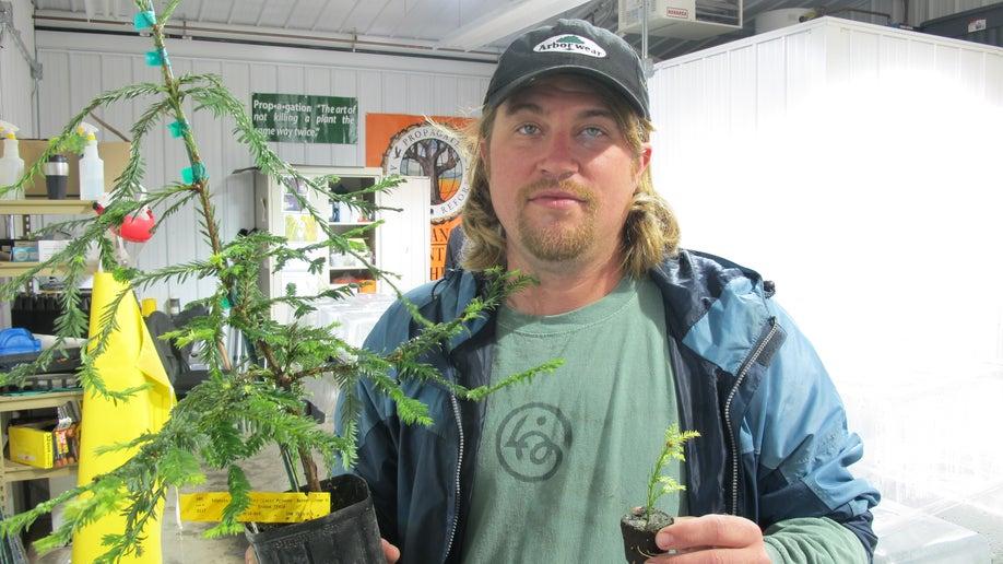 Replanting Redwoods