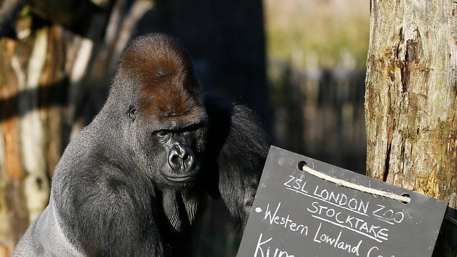 Britain Zoo Count