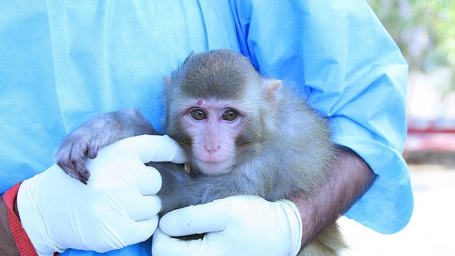 829eed03-Mideast Iran Space Monkey