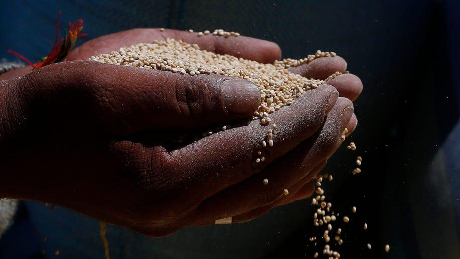 APTOPIX Bolivia Quinoa War