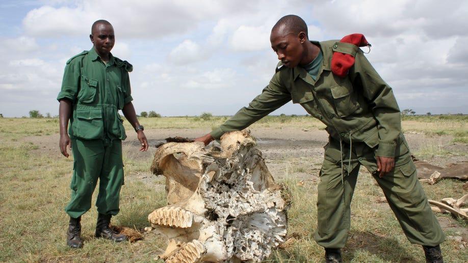 0a210fb8-Tanzania Elephant Slaughter