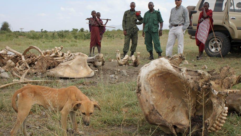 8cf1bd2e-Tanzania Elephant Slaughter
