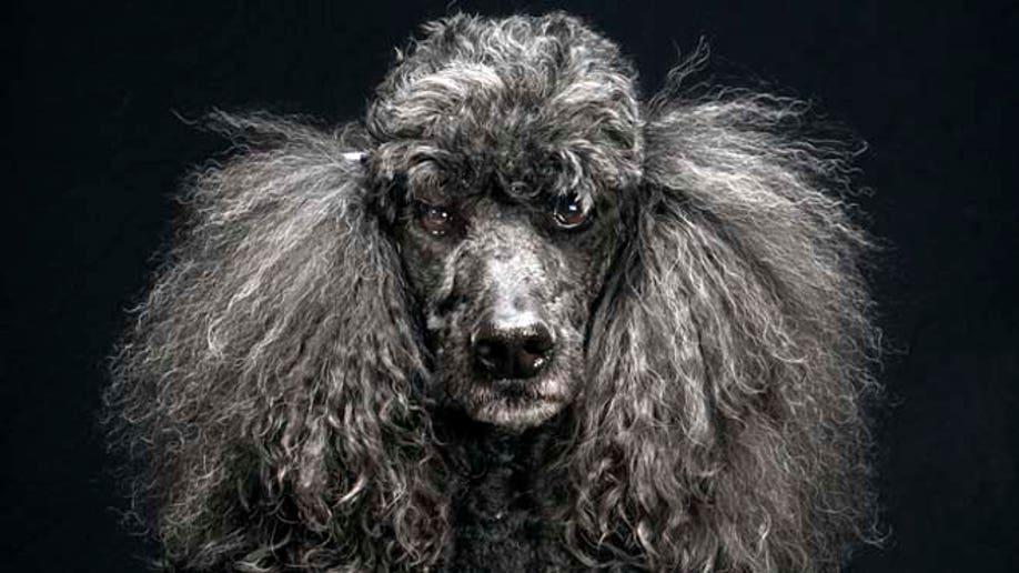 e3181b9a-Black Dogs Project