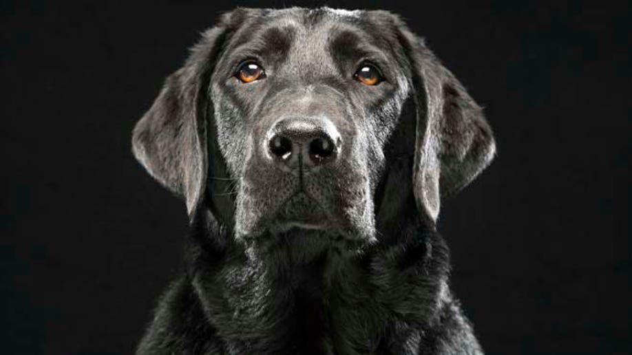 2bbf19eb-Black Dogs Project