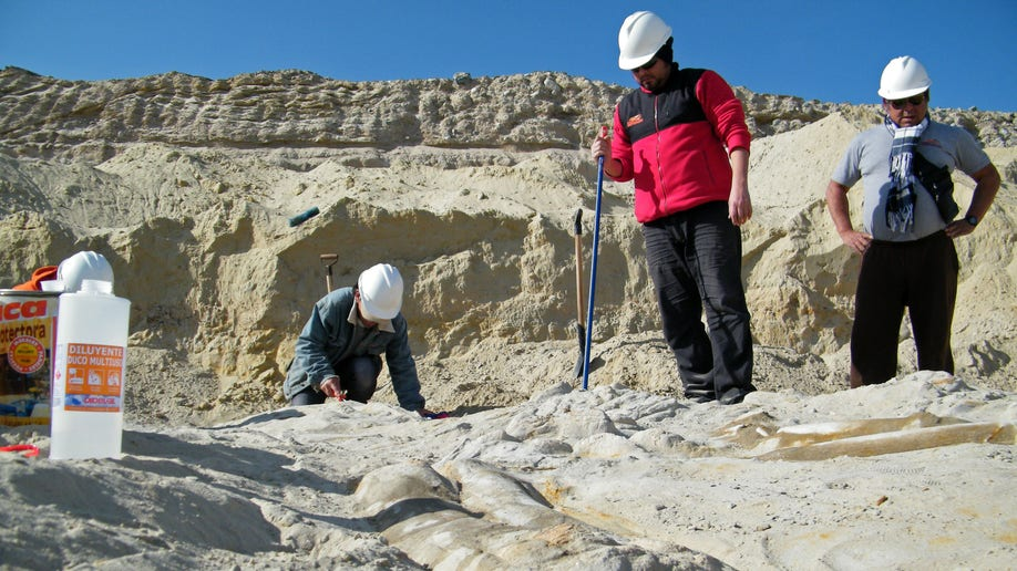 55bb3d45-Chile Whale Fossils