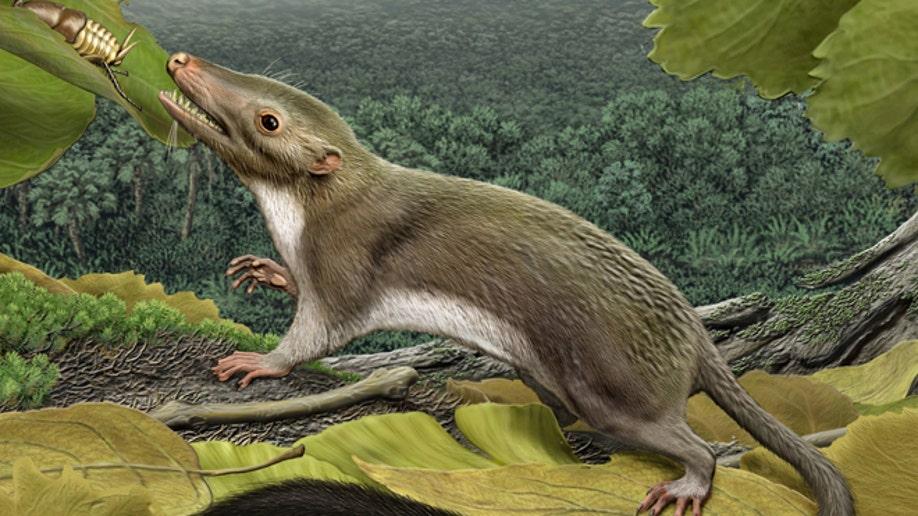 971501f1-Dinosaur Mammal Divide