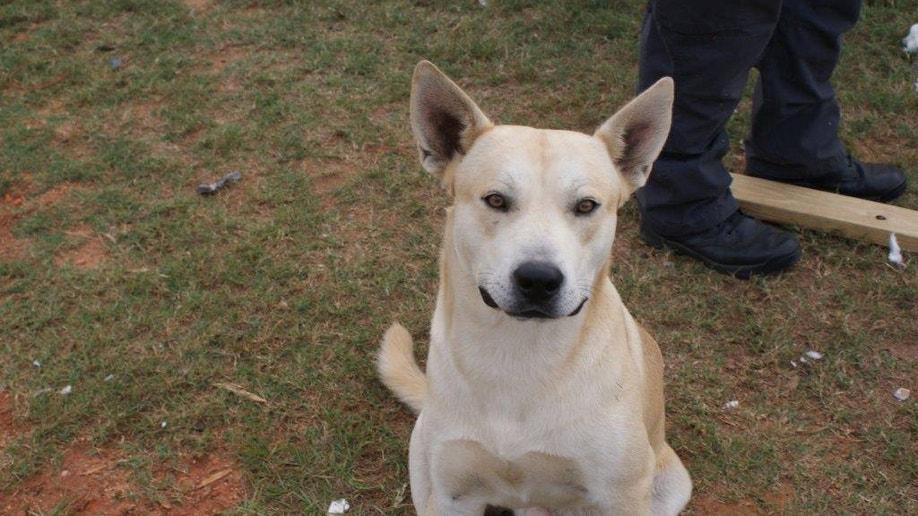 8f6ac235-Dog Arrests Owner