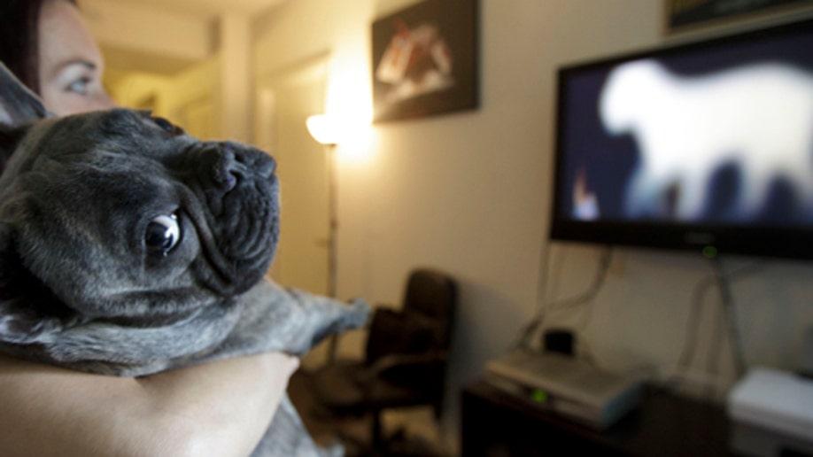 056b6c63-Pets DogTV
