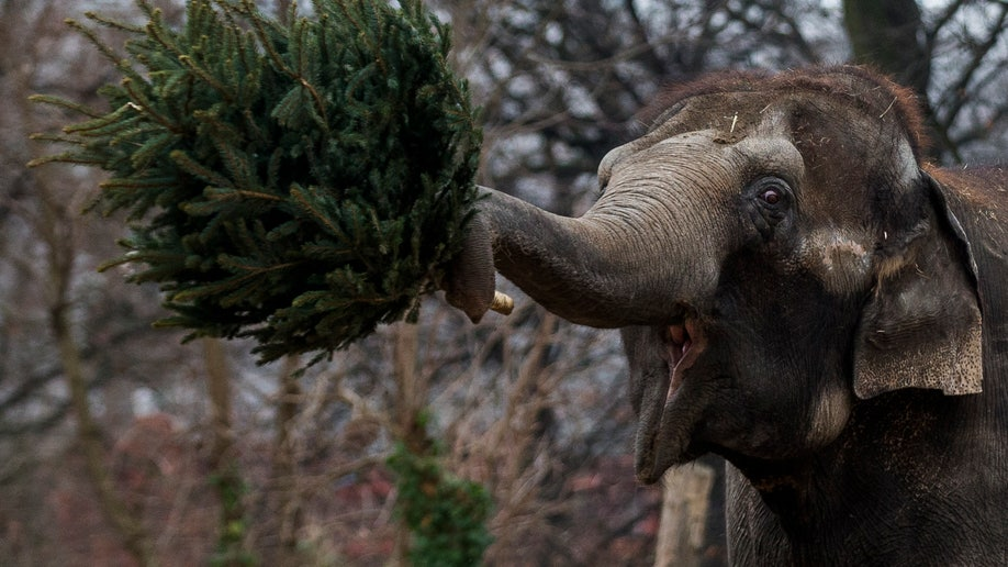 Germany Christmas Tree Feeding