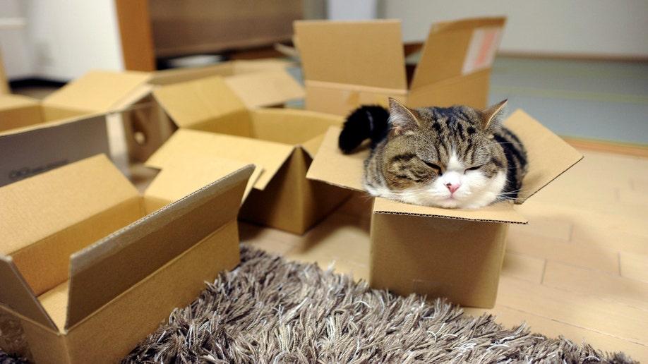 c8207cc6-Pets-Internet Cat Stars
