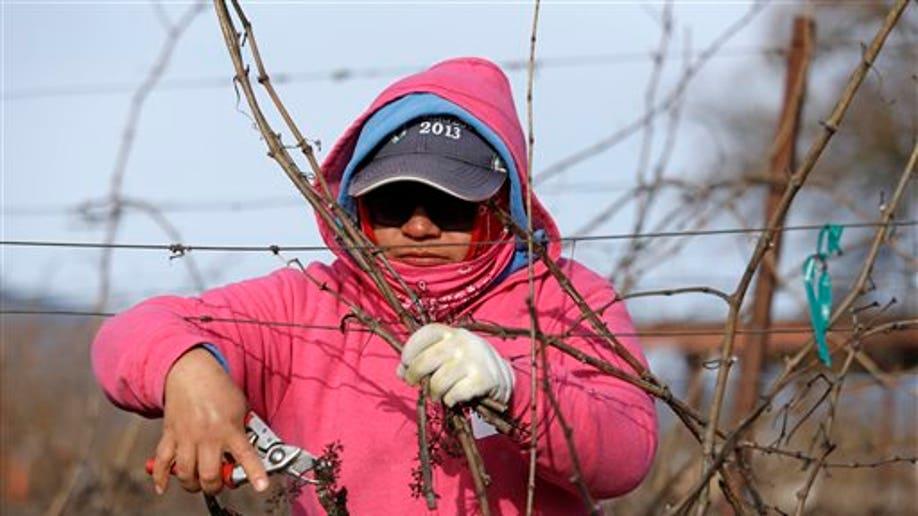 e029b617-Food Vine Women