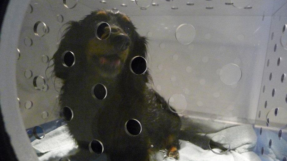Ailing pets receiving hyperbaric chamber treatment | Fox News