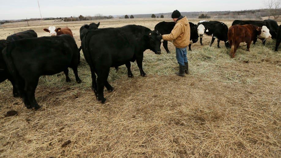 bedbc725-Shrinking Cattle Herd